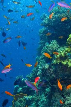 Scuba Dive The Great Barrier Reef: The Ultimate Travel Bucket List