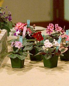 Martha Stewart on growing Violets.