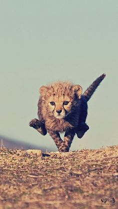 Download Wallpaper 750x1334 Cheetah, Cub, Jump, Sky iPhone 6 HD ...