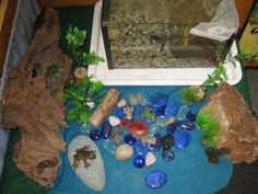 life cycle of a frog - wonderful documentation pictures