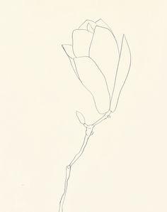 Ellsworth Kelly - Plant Drawings (1960-91)   Magnolia//