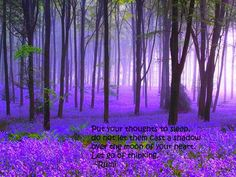 trees in violet