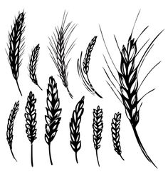 Rye wheat vector art - Download Wheat vectors - 239764