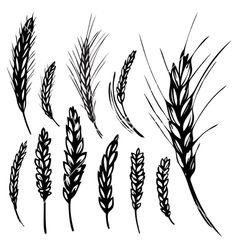 Rye wheat vector art - Download Wheat vectors - 239764