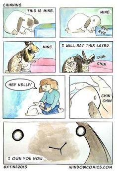 windowcomics by xtina so true lol, my bunnies own my binder Cute Animal Memes, Cute Funny Animals, Funny Animal Pictures, Cute Baby Animals, Bunny Drawing, Bunny Art, Cute Baby Bunnies, Funny Bunnies, Bunny Meme