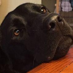 My boy #blacklab #labradorretriever #dogwalking #catsitting #farmanimals #petsitter #Indiantrail #waxhaw #Monroe #Loveandkissespetsitting #dog #cat #catsitter