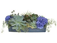 Succulent tapestry centerpiece with blue hydrangea and textural accents.  Floral Design Institute | home | Welcome to Flower School