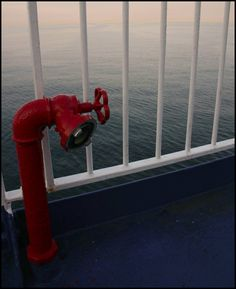 a flower on the boat - our way from Sweden to Germany -