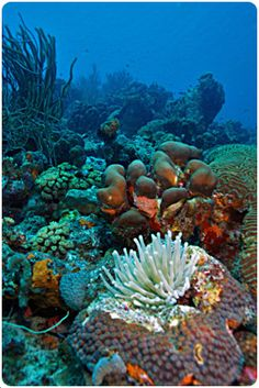 Bonaire   reef-scene Caribbe