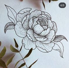 Some not-so-wild wildflower drawing to inspire you today! Peony Drawing, Floral Drawing, Flower Drawing Tutorials, Flower Sketches, Botanical Line Drawing, Botanical Illustration, Rosen Tattoo Frau, Tattoo Drawings, Art Drawings