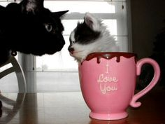 I love you cup kitten.