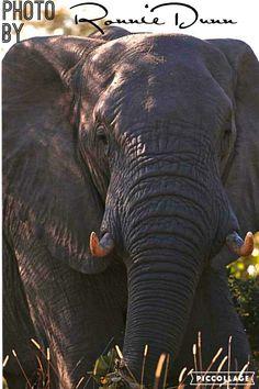 Elephant Pictures, Animals, Animales, Animaux, Elephants Photos, Animal Memes, Animal, Animais, Dieren
