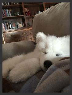 33 Samoyed Saturday Samoyed Photos Who doesnt love cute dogs and Samoyed are some of the cutest. Cute Baby Animals, Animals And Pets, Funny Animals, Cute Dogs And Puppies, I Love Dogs, Doggies, Beautiful Dogs, Animals Beautiful, Samoyed Dogs