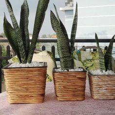 Home24h co,.ltd: Water Hyacinth Planter Pots Home24h - Hyacinth Planter Pot, Woven Crafts-Home24h.biz