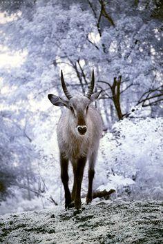 Animal Kingdom in Heaven 01 by brumie.deviantart.com on @deviantART