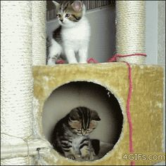 These 53 GIFs Show Why Cats Are The Best Pets Ever - BlazePress