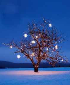 Wish I could decorate a tree like this. Snow would be nice too.