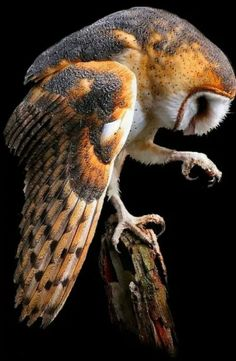 beautiful orange-gray owl up close eagle owls of paradise birds Owl Photos, Owl Pictures, Nature Animals, Animals And Pets, Cute Animals, Beautiful Owl, Animals Beautiful, Gray Owl, Owl Bird
