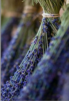 The smell of Lavender~ the natural perfumes of nature to help achieve peace of mind and joy from life.