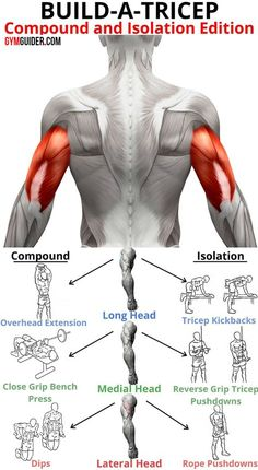 Triceps Workout 3 Superset Workout Routine For Killer Triceps &; GymGuider Triceps Workout 3 Superset Workout Routine For Killer Triceps &; GymGuider Semi Gym Curl after curl won't build sleeve-busting […] fitness Gym Workout Chart, Gym Workout Tips, Workout Routines, Workout Videos, Bicep And Tricep Workout, Superset Arm Workout, Best Tricep Exercises, Forearm Workout, Biceps And Triceps