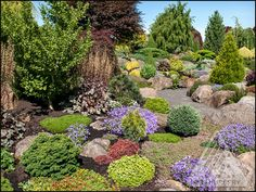 A beautiful mixed border featuring colorful conifers of all shapes and sizes! Garden Shrubs, Garden Edging, Country Landscaping, Front Yard Landscaping, Landscaping Ideas, Japanese Garden Plants, Mixed Border, Trees For Front Yard, Garden Photos