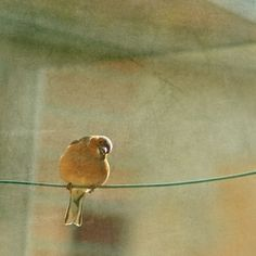 At the window a bird by aufilde on Etsy, $35.00