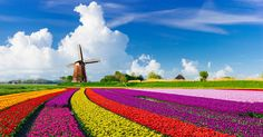 Dutch Windmill Over Tulips Field - tulips, windmill, field, Nature, clouds Landscape Photos, Landscape Designs, Landscape Photography, Tulip Fields Netherlands, Holland Netherlands, Netherlands Windmills, Beautiful Landscapes, Trip Advisor, Beautiful Places