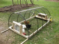 Chicken Tractor with repurposed materials.  Finally a use for the irrigation tubing left over from my hula hoop making adventures!