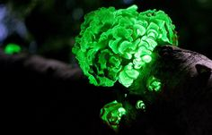 Just Beautiful! - Top 10 Bioluminescent, Glowing Animal & Creature Pictures