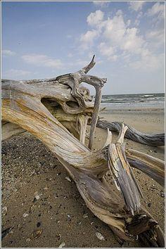 Botany Beach, Edisto Island, Charleston, County South Carolina