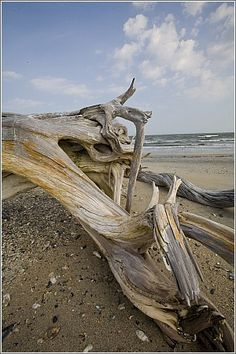 Drift Along Unspoiled Beach - South Carolina Beaches.  Driftwood can be really cool looking