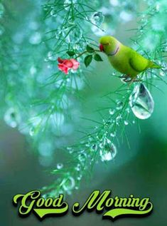 Good Morning Flowers Pictures, Good Morning Friends Images, Cute Good Morning Images, Good Morning Dear Friend, Good Morning Happy Sunday, Good Morning Gif, Good Morning Picture, Good Morning Wishes, Morning Pictures