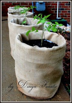 Tomato Plants diy Design Fanatic, growing tomatoes, burlap, tomatoes - How to easily grow tomatoes (or anything else) in plastic buckets! Growing Tomatoes Indoors, Growing Tomato Plants, Growing Tomatoes In Containers, Growing Vegetables, Grow Tomatoes, Tomato Planter, Tomato Garden, Bucket Gardening, Container Gardening