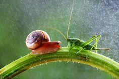 ありのままの自然に恍惚。素敵すぎる昆虫達のリアル・ファタジックワールド