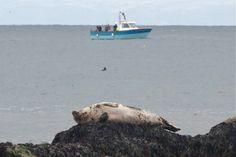 Seal basks near Catherine Zeta Jones' house