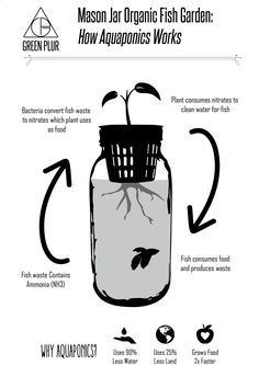 Aquaponics System - How aquaponics works, example with Mason Jar Aquaponics. Grow your indoor organic herb garden/ salad greens with this desktop hydroponics system. #greenplur Break-Through Organic Gardening Secret Grows You Up To 10 Times The Plants, In Half The Time, With Healthier Plants, While the Fish Do All the Work... And Yet... Your Plants Grow Abundantly, Taste Amazing, and Are Extremely Healthy