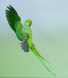 by Jens Stahl on YouPic Parakeet, Parrot, Rose, Nature, Animals, Steel, Animales, Parrot Bird, Pink