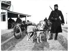 1914; Belgian machine guns pulled by dogs