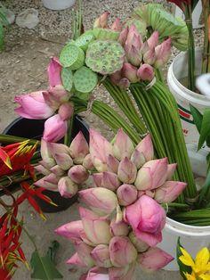 Lotus Flower from Vanuatu