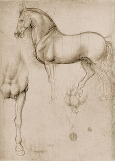 Horse by Leonardo da Vinci. Study of the monument to Francesco Sforza.