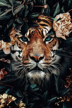Tiger jungle poster bestellen -You can find Wild cats and more on our website. Tier Wallpaper, Iphone Background Wallpaper, Animal Wallpaper, Tiger Wallpaper Iphone, Wall Wallpaper, Most Beautiful Animals, Beautiful Creatures, Beautiful Pictures, Beautiful Scenery
