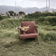 Alec Soth -     This image is amazing, and crazy random.  However, I feel that makes it so successful.  The contrast between the green grass, and red/burgundy hue of the chair makes the image appealing to eye.  As well as the chicken that is placed on the chair.  That is the icing on the cake.