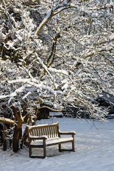 Garden bench in a winter garden...take a deep breath....winter is coming!