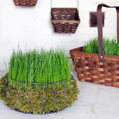 Grow a grass Easter basket in 5 days!