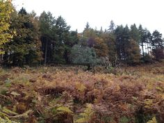 Ferny fields and autumn colour, Lake District