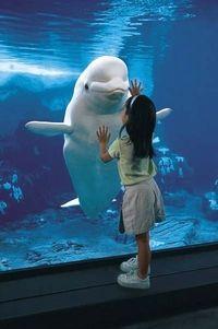 Anaheim Theme Park Transport: SeaWorld San Diego #anaheim #california