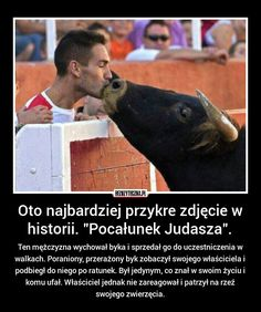 Ten mężczyzna wychował byka i sprzedał go do uczestniczenia w walkach. Poraniony, przerażony byk zobaczył swojego właściciela i podbiegł do niego po ratunek. Był jedynym, co znał w swoim życiu i komu ufał. Właściciel jednak nie zareagował i patrzył na rzeź swojego zwierzęcia.