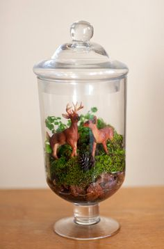 Idea of using apothecary jars for decor with rustic stuff inside ;) not deer :)