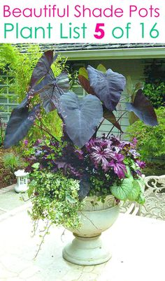 Create beautiful shade garden pots with easy shade loving plants & flowers. 16 colorful mixed container plant lists & great design ideas for shade gardens! – A Piece of Rainbow planters Evergreen Potted Plants, Potted Plants For Shade, Shade Plants Container, Potted Plants Patio, Shade Garden Plants, Container Flowers, Garden Pots, Container Gardening, Evergreens For Shade