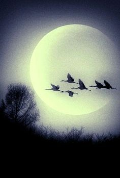 geese across the moon